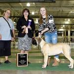 Group 2! 5 mos shown by Cassie Kneeland at Columbus,OH Thank you Judge Eldred