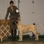 6mos - his first show...holding his stack like such a little man!Urbana, OH show