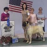 13 mo - winning the 12-18 mo class at Nationals from Judge Barbara Dempsey Alderman