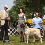 14 mos - a new Champion with his 4th major! Thank you Judge Jon Cole!