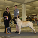 BOB from judge Catherine Bell and G1 Owner Handler from judge Charles Olvis - 21 mos